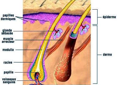 Lhuile de bardane avec le poivre rouge pour la croissance des cheveu les rappels le moyen